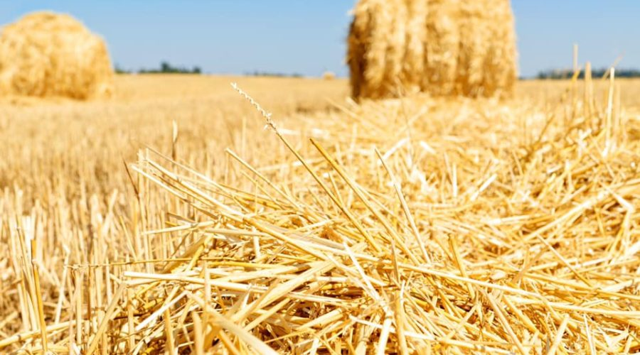 Hay Gurl, Hay…A Country Show